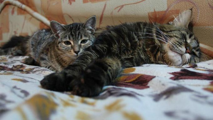 Хитрости уборки квартиры, вкоторой живут домашние животные