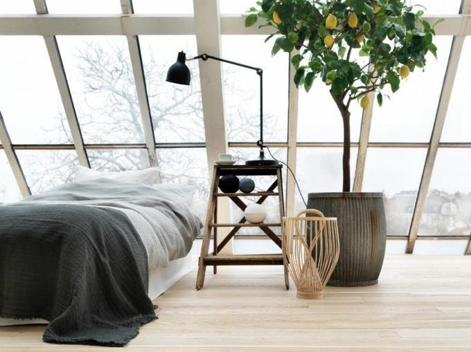 Комнатные растения винтерьере. 4идеи декора
