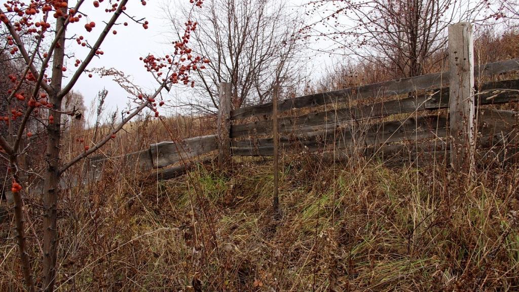 Место для посадки сосны