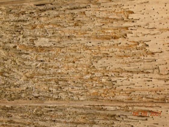 реставрация древесины фото