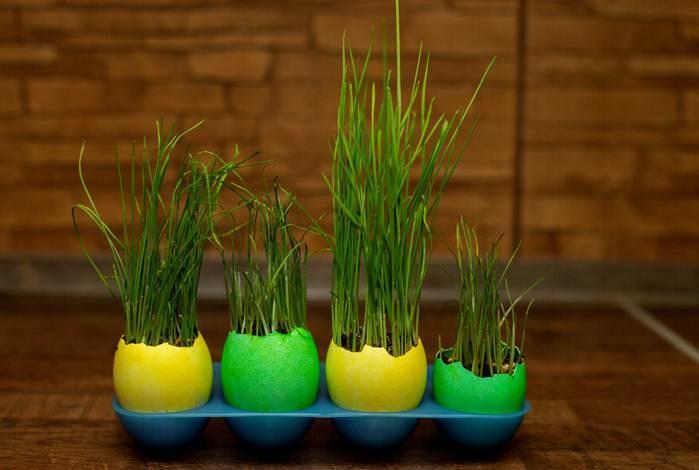 Растения в яичной скорлупе