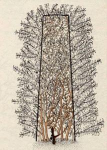 Стрижка изгороди