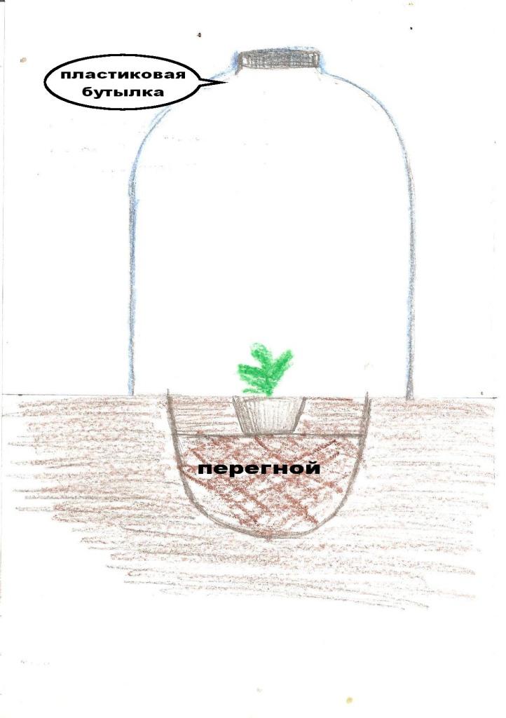 Выращивания дыни и арбуза