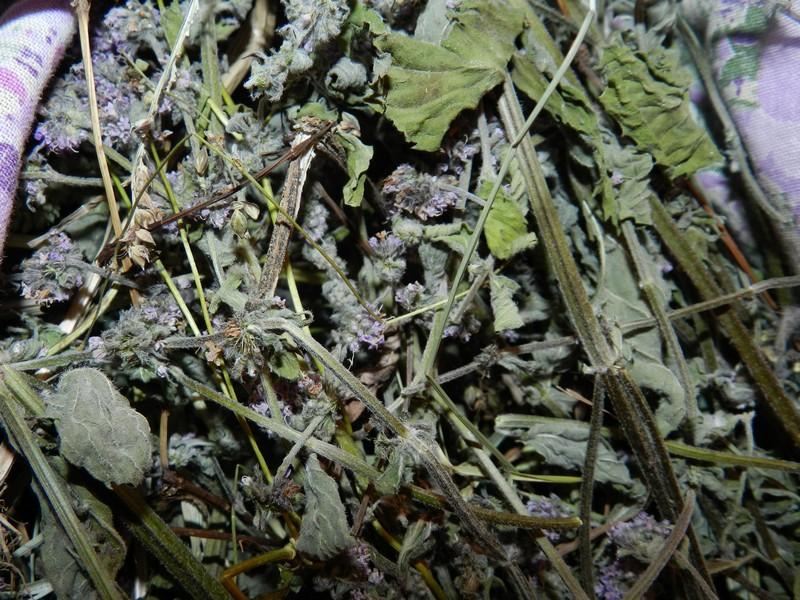 Как хранить травы