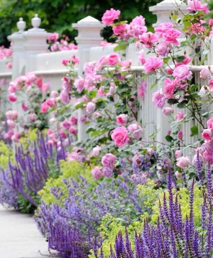Плетистые и кустарниковые