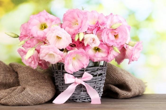 Цветок госпожа клеродендрум томпсона