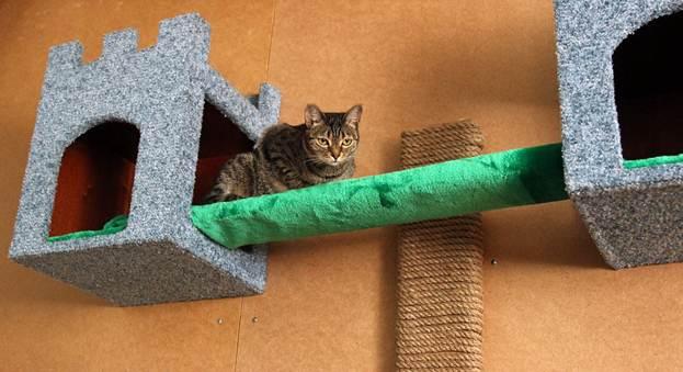 Кошачий домик с мостом