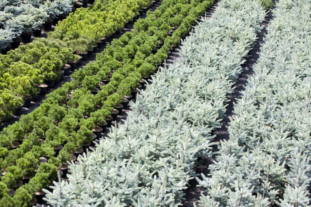 Купить цветы в оби, бесплатные фото ...: pictures11.ru/kupit-cvety-v-obi.html