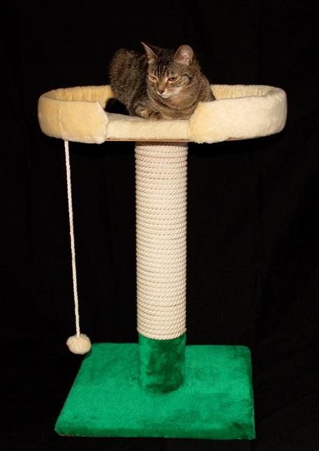 Как сделать когтеточку для кошки в домашних условиях