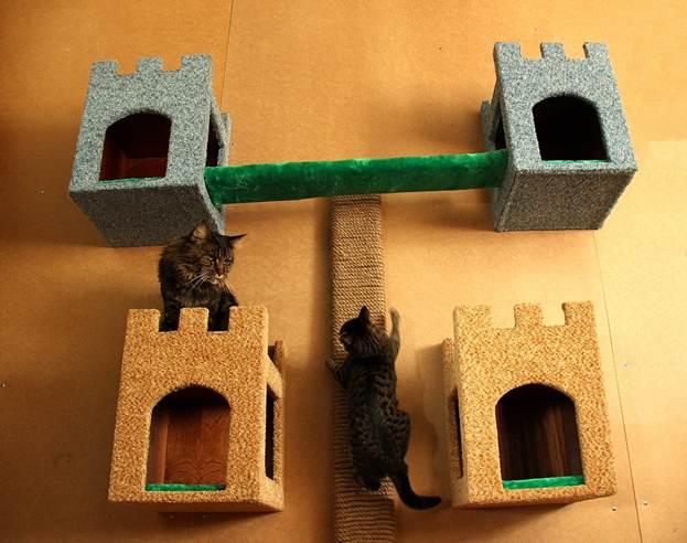 Кошачьи апартаменты