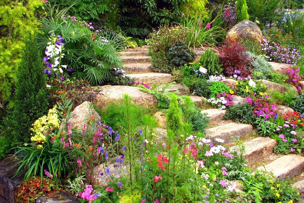Многолетние растения