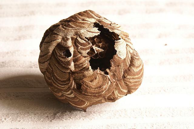 Как избавиться от осиного гнезда? / страница 2 | форум Woman ru