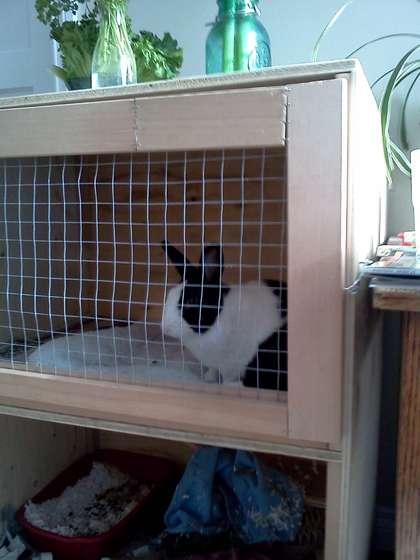Как построить клетку для кроликов
