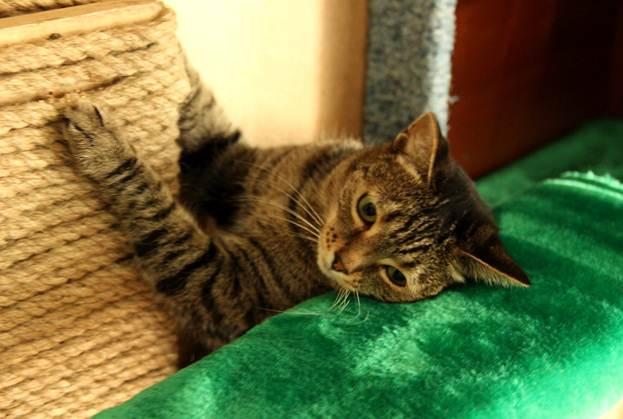 Аттракционы для котов