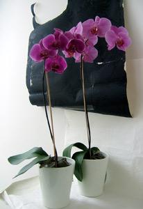 Как выращивать. орхидеи