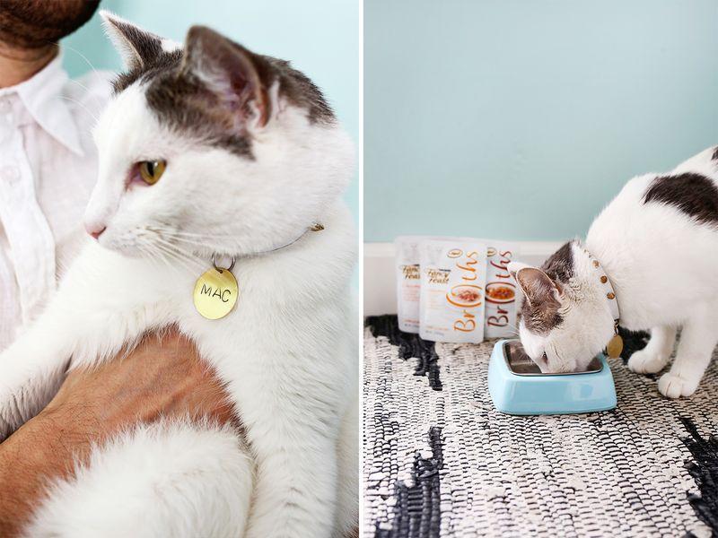 Как сделать ошейник для кота своими руками - Woman s Day 16