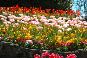 Цветники на участке