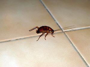 Как убить тараканов