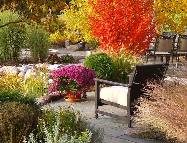 Хризантемы: все опосадке иуходе замноголетними иоднолетними сортами
